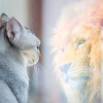 Cat,Looking,At,Mirror,And,Sees,Itself,As,A,Lion.